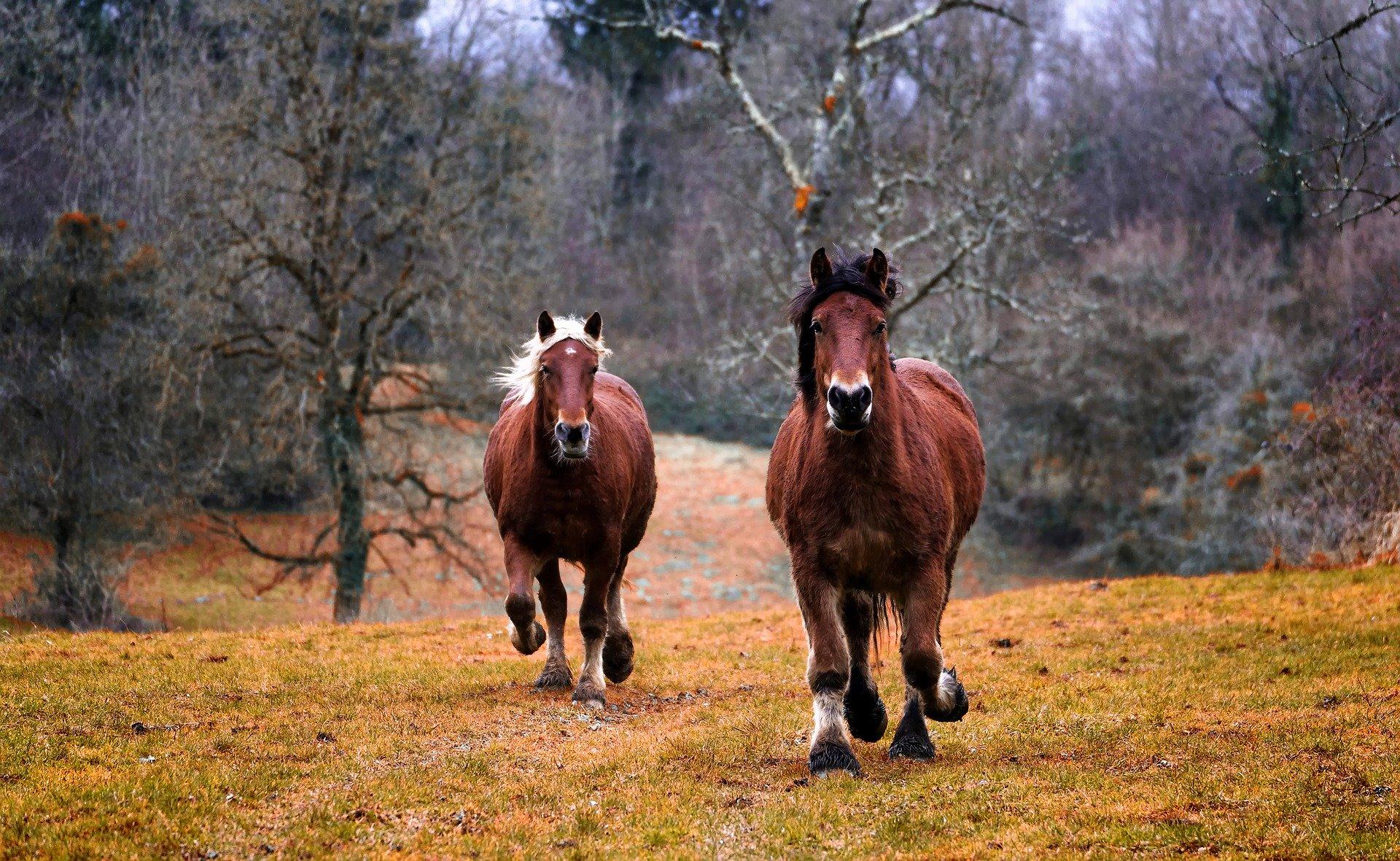 Minden ami ló